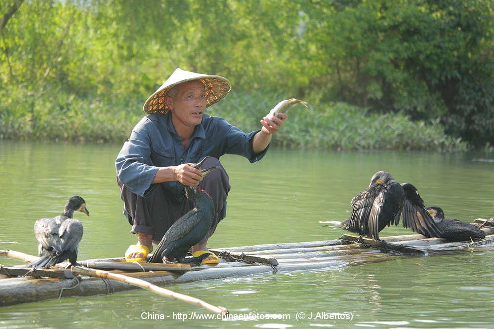 Estampas de china pesca con cormoranes taringa for Imagenes de peces chinos