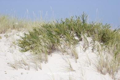 Sistema de dunas