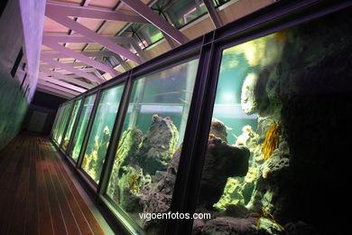 AQUARIUM OF THE MUSEUM OF THE SEA OF GALICIA