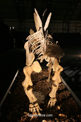 DINOSAUR FOSSIL - SKULLS AND BONES. UNIVERSAL EXHIBITION - GOBISSAUROS - DINOSAURS OF THE GOBI DESERT. EXTINCTION