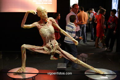 PLASTINATION EXHIBITION. ANATOMY