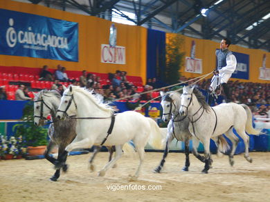 SHOW JUMPING COMPETITION - CSI 2004