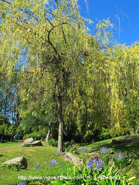 Fotos de jardines del parque de castrelos vigo galicia p4 for Jardines galicia