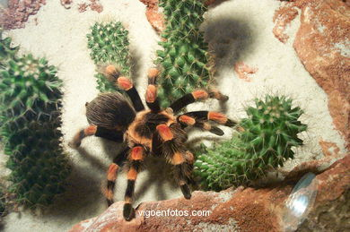 SPIDERS, TARANTULAS AND SCORPIONS. ARACHNIDS