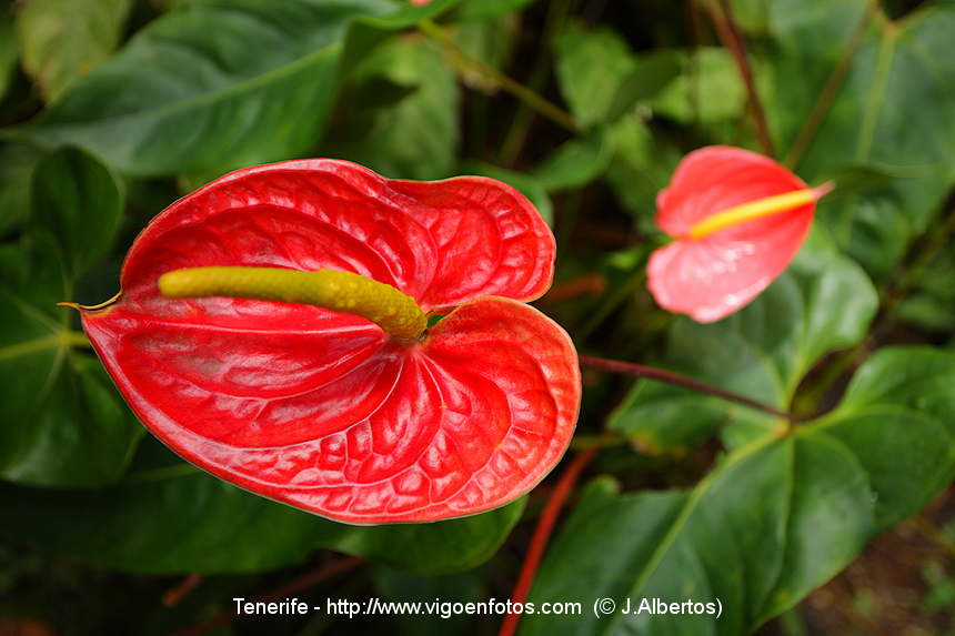 Fotos de flores del jard n bot nico islas canarias - Fotos de flores de jardin ...